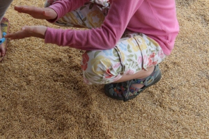 Venice playing in the husks - these will be sold as fuel for fires