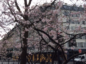 Spring blossoms at Canal St. Martin two days ago