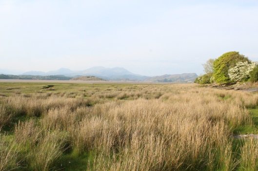 View of sea grass and mountains from our cottage, Northern Wales