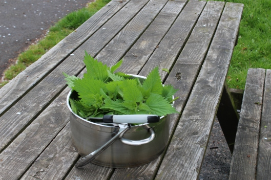 Pot of nettles