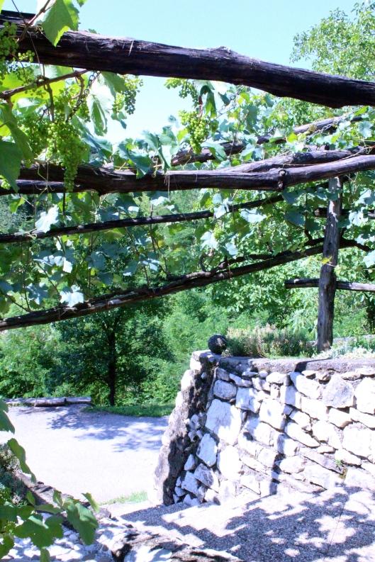 Grape vines in front of front door, CS Slovenia