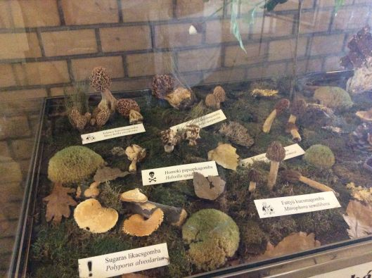 Display of edible and poisonous mushrooms, Budapest market