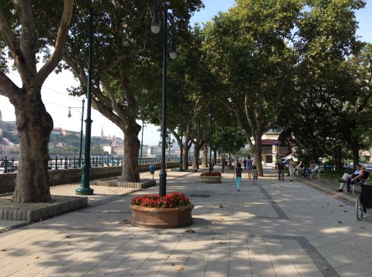 Allée on the banks of the Danube