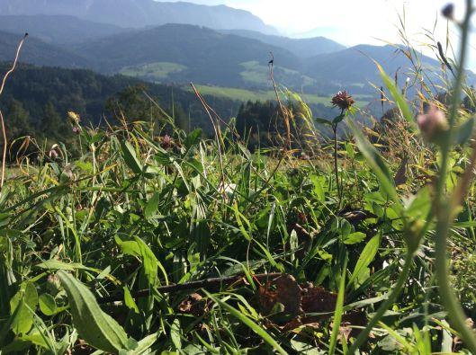miglberg grass