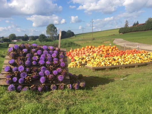 Pumpkins and artichokes, Upper Austria