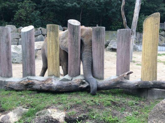 One of many elephants, Schönbrunn