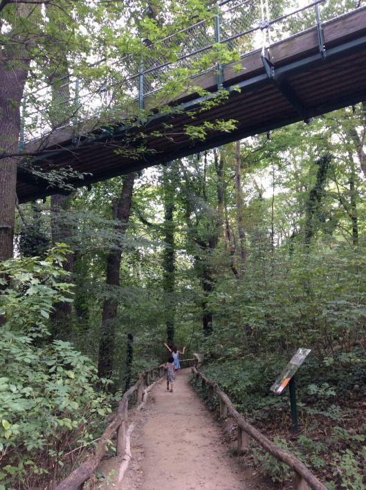 Relaxing woodland paths, Tiergarten Schönbrunn