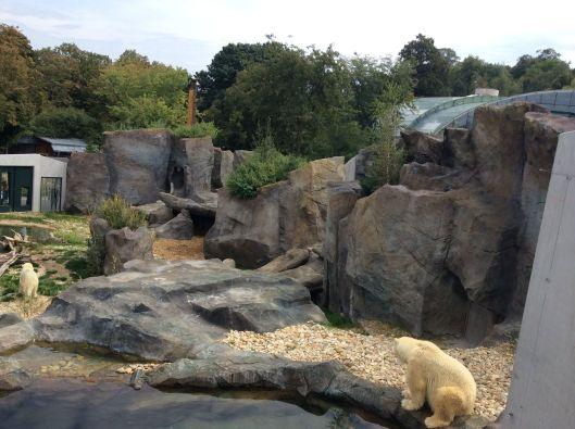 Polar bears, Schönbrunn