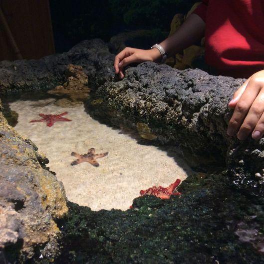 The aquarium was outstanding.