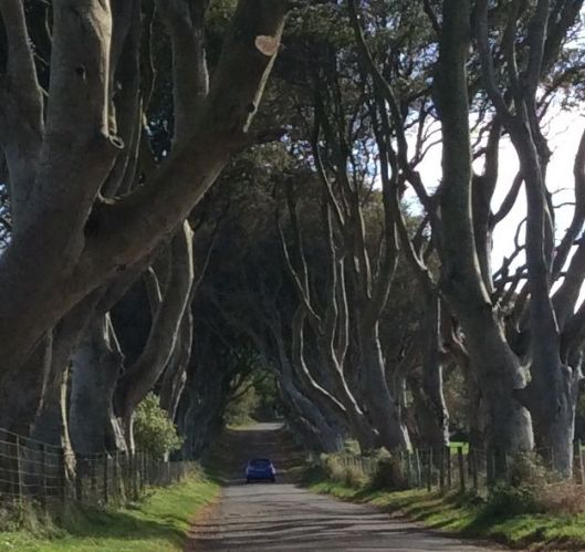 A car drives through the dark hedges