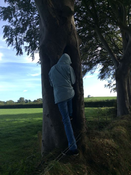 Crevice in beech tree large enough for Onlyboy to climb into
