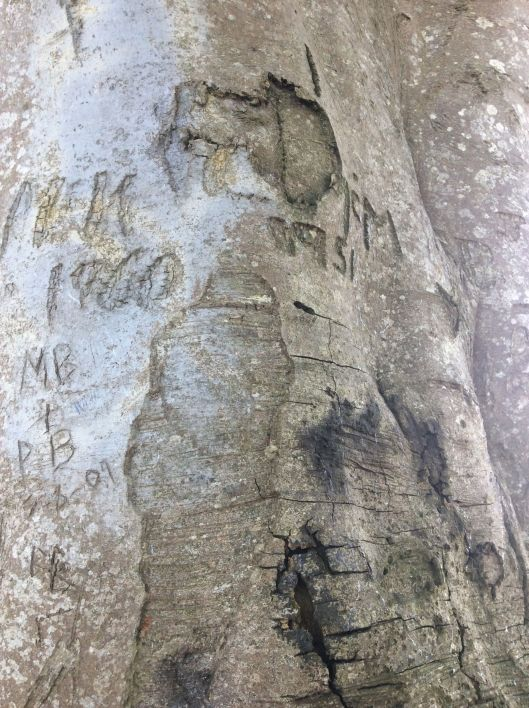 Old graffiti on a beech tree
