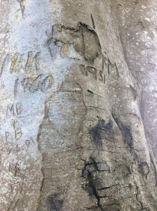 Old graffiti on a beech tree