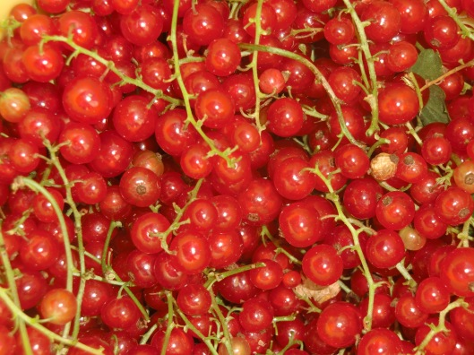 Red currents from garden, Austria (photo by Lifelongfriend)