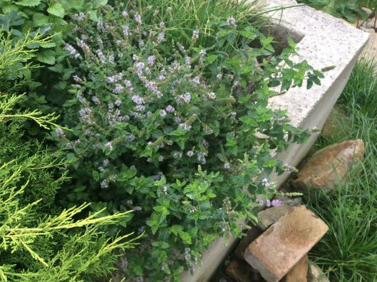Add oomph to your dishes with free herbs (Austria).