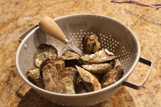 Our oysters are washed and ready for shucking.