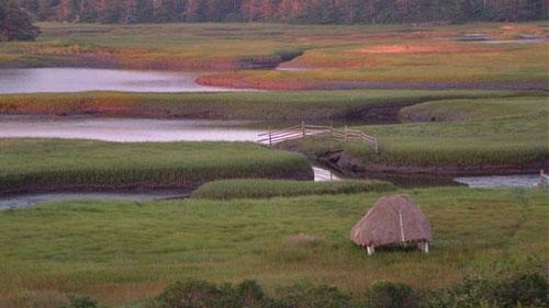 Typical salt marshes, Nova Scotia (from levillage.novascotia.ca)
