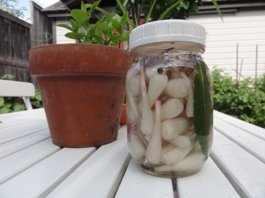 Quick pickled ramps