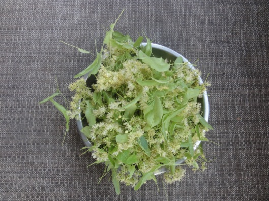 Linden blossoms: dry and enjoy as a tea when the weather turns cold.  Excellent for colds and flus.