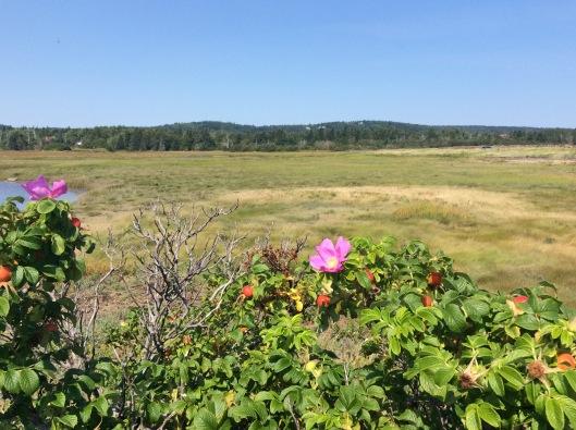 castalia marsh rose