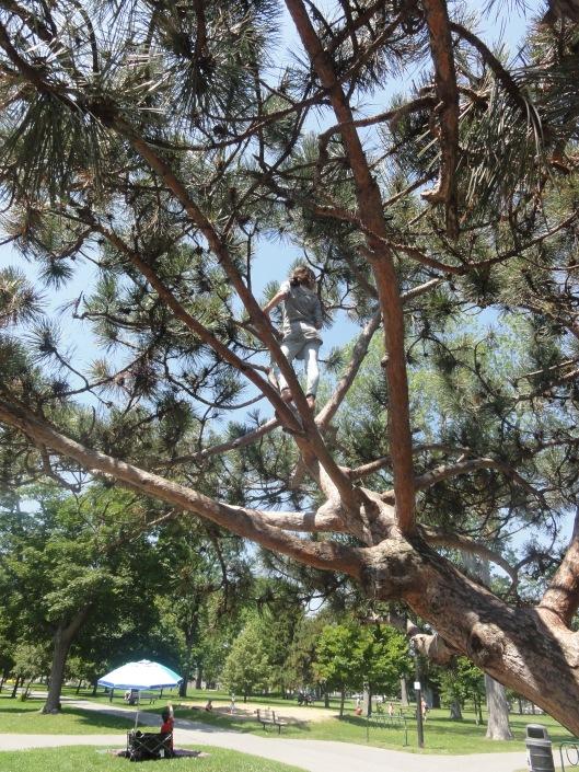 City Park's wonderful old climbing tree