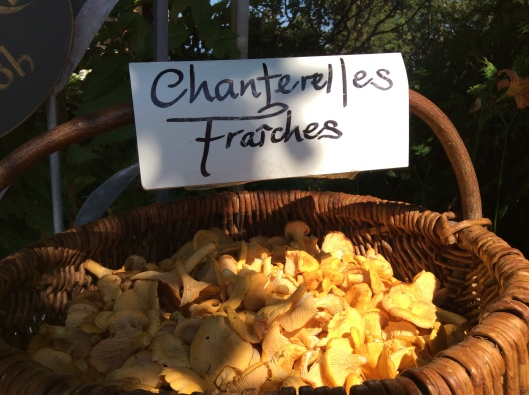 Yes, but he's also a chanterelle forager ($15/lb) AND it turns out that he was at the very same Jethro Tull concert as Fabio (Montreal, 1969 or 1970, probably 1970, maybe 71. Dates are sketch at this point.