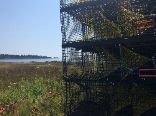 lobster traps2